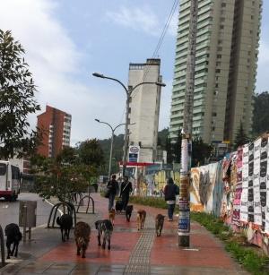 Elegante parche de perros callejeros