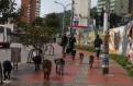 Habitante de calle cuida de perros callejeros